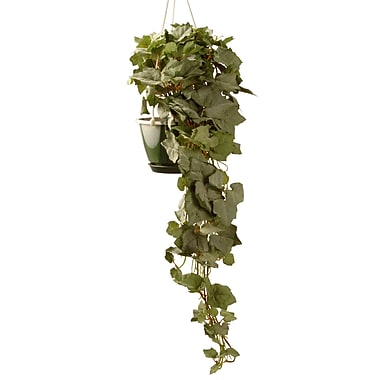 National Tree Co. Hanging Grape Foliage Plant in Pot