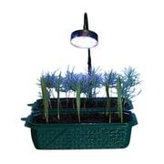 Dunecraft Growing LED Light Stick