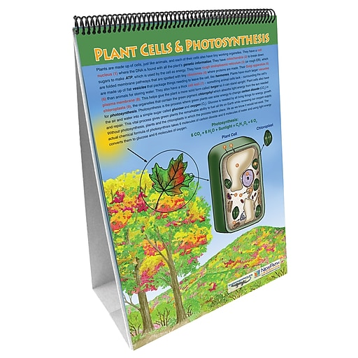 NewPath Learning All About Plants Flip Chart Set