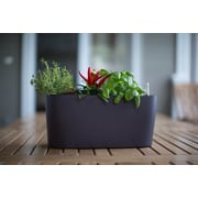 Algreen Modena Self-Watering Plastic Planter Box; Matte Mocha
