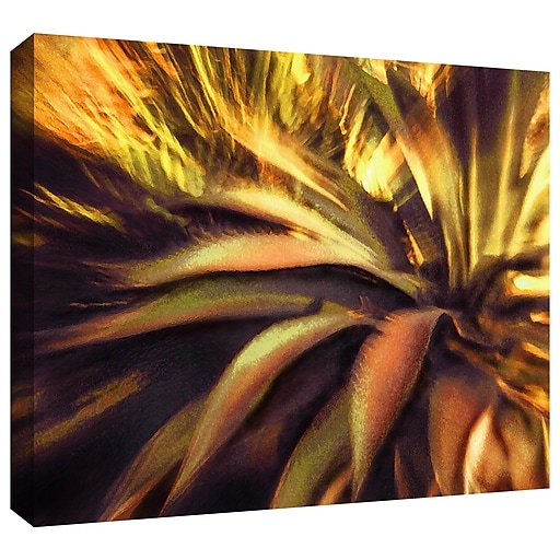 "ArtWall 'Agave Puesta' Gallery-Wrapped Canvas 24"" x 32"" (0uhl021a2432w)"