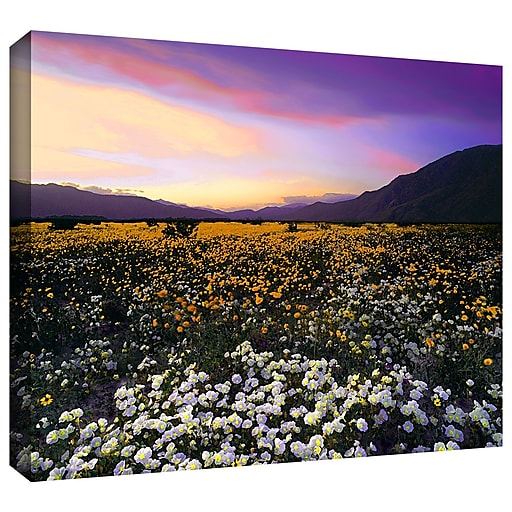 "ArtWall ""Borrego Desert Spring"" Gallery-Wrapped Canvas 24"" x 32"" (0uhl023a2432w)"