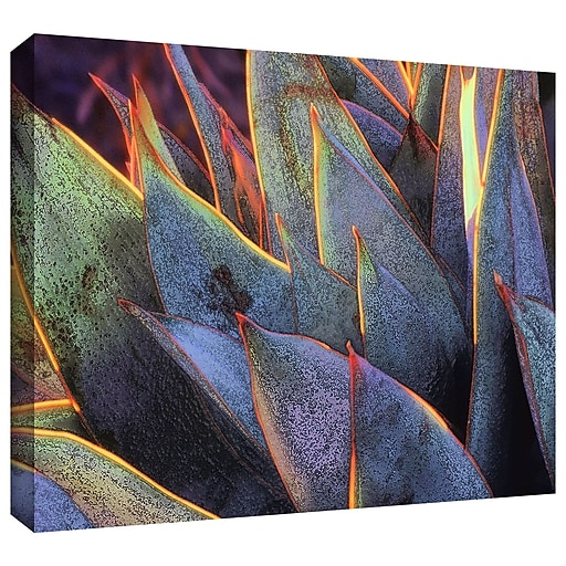 "ArtWall ""Sun Succulent"" Gallery-Wrapped Canvas 14"" x 18"" (0uhl038a1418w)"