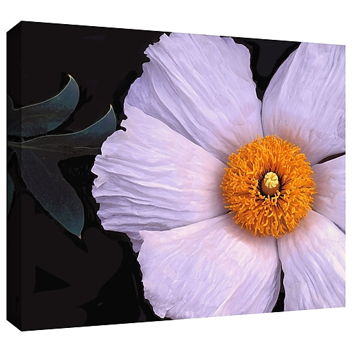 """ArtWall 'Wild Hibiscus' Gallery-Wrapped Canvas 24"""" x 32"""" (0uhl044a2432w)"""