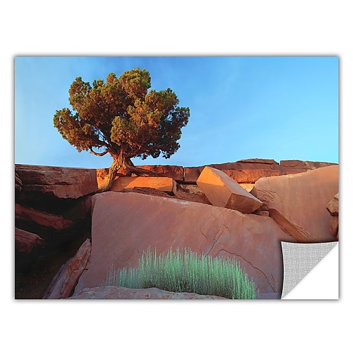 "ArtWall 'Dead Horse Point' Art Appeelz Removable Wall Art Graphic 36"" x 48"" (0uhl049a3648p)"