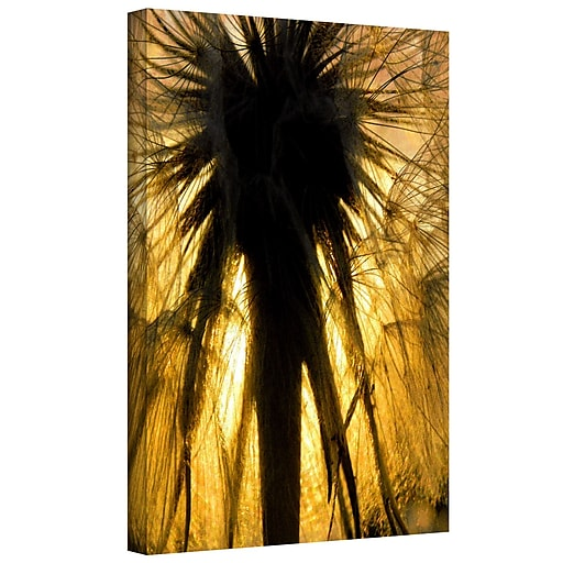 """ArtWall """"Heart of a Lion-Dandelion"""" Gallery-Wrapped Canvas 36"""" x 48"""" (0uhl053a3648w)"""