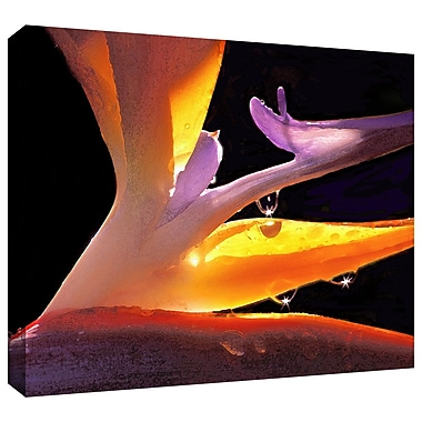 ArtWall 'Rain Bird' Gallery-Wrapped Canvas 36