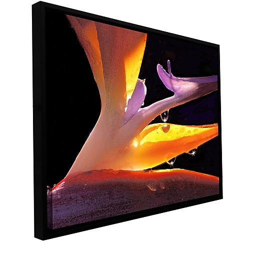 "ArtWall 'Rain Bird' Gallery-Wrapped Canvas 36"" x 48"" Floater-Framed (0uhl092a3648f)"