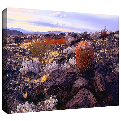"""ArtWall 'In The Mojave' Gallery-Wrapped Canvas 14"""" x 18"""" (0uhl110a1418w)"""