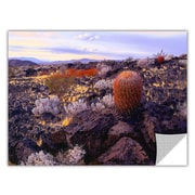 "ArtWall 'In The Mojave' Art Appeelz Removable Wall Art Graphic 36"" x 48"" (0uhl110a3648p)"
