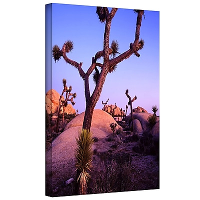 ArtWall 'Joshua Tree Twilight' Gallery-Wrapped Canvas 24