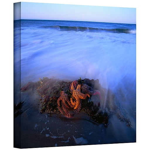 """ArtWall """"Morning Sea Stars"""" Gallery-Wrapped Canvas 24"""" x 24"""" (0uhl114a2424w)"""