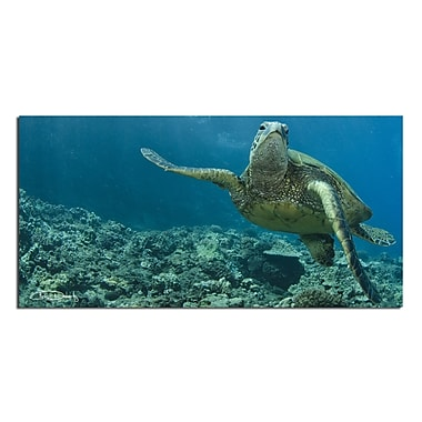 Ready2hangart 'Maui Turtle Stony' by Chris Doherty Framed Photographic Print on Wrapped Canvas