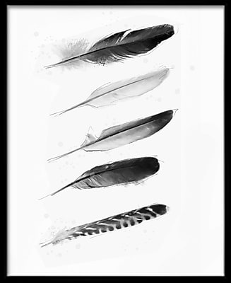 PTM Images Feathers I Framed Graphic Art