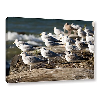 ArtWall 'Pigeons' Gallery-Wrapped Canvas 12