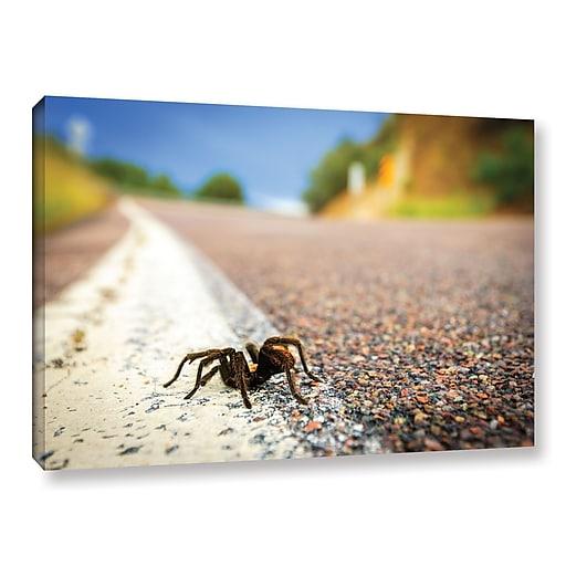 """ArtWall 'Tarantula' Gallery-Wrapped Canvas 32"""" x 48"""" (0yor057a3248w)"""