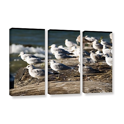 ArtWall 'Pigeons' 3-Piece Gallery-Wrapped Canvas Set 36