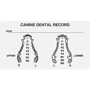 Veterinary Examination Medical Labels; Canine Dental Record, White, 1-3/4x3-1/4