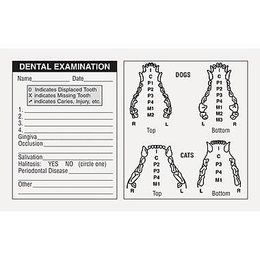 Veterinary Examination Medical Labels; Dog & Cat Dental, White, 2-1/2x4