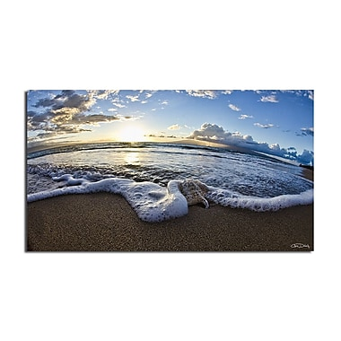 Ready2hangart 'Sea Star' by Christopher Doherty Framed Photographic Print on Wrapped Canvas
