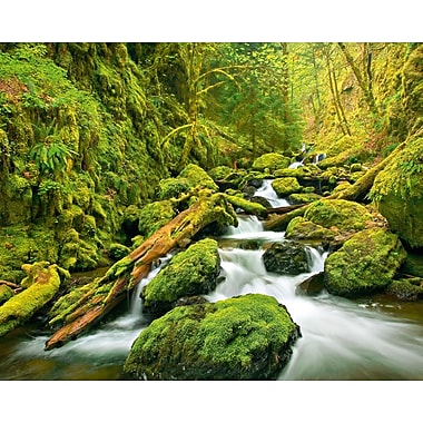 Brewster Home Fashions Ideal Decor Green Canyon Cascades Wall Mural