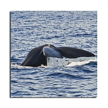 Ready2hangart 'Whale' by Christopher Doherty Framed Photographic Print on Wrapped Canvas