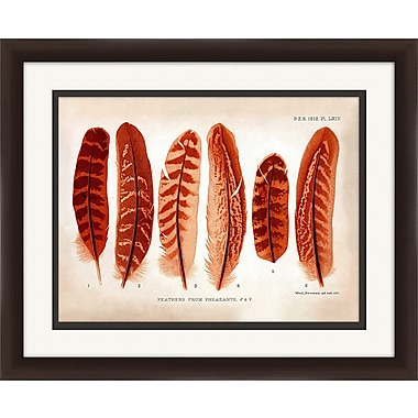 PTM Images Feathers II Framed Graphic Art