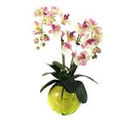 Dalmarko Designs Dalmarko Designs Orchid in Bowl