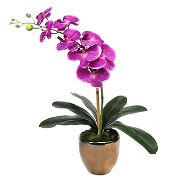 Dalmarko Designs Mixed Ivy Table Top Plant in Terracotta Planter