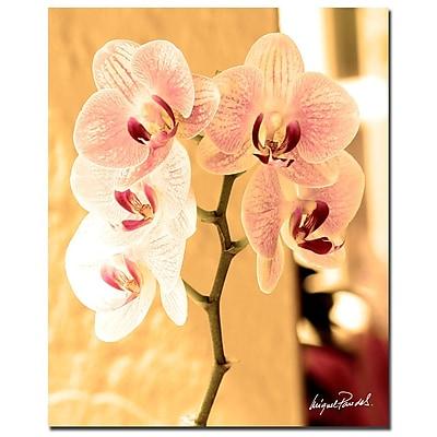Trademark Fine Art Miguel Paredes 'Orchids I' 32 x 26 (MP0686-C2632GG)