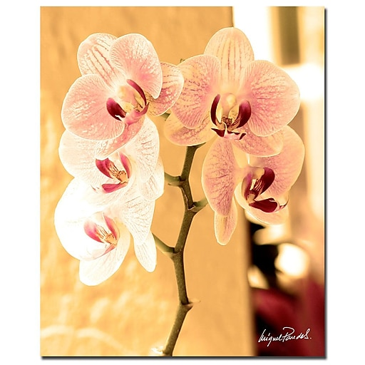 Trademark Fine Art Miguel Paredes 'Orchids I'  32 x 26 (MP0686-C2632GG)