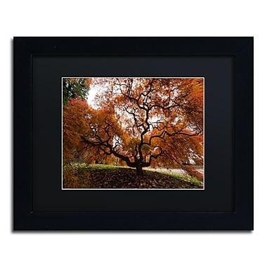Trademark Fine Art Kurt Shaffer 'Autumn Japanese Maple Tree' 11 x 14 (886511701779)