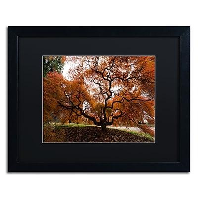 Trademark Fine Art Kurt Shaffer 'Autumn Japanese Maple Tree' 16 x 20 (886511701793)