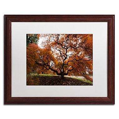 Trademark Fine Art Kurt Shaffer 'Autumn Japanese Maple Tree' 16 x 20 (KS01021-W1620MF)