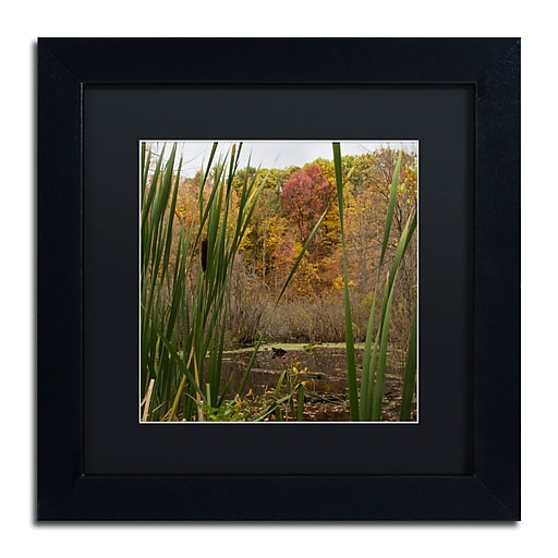 Trademark Fine Art Kurt Shaffer 'Autumn Marsh'  11 x 11 (886511701878)