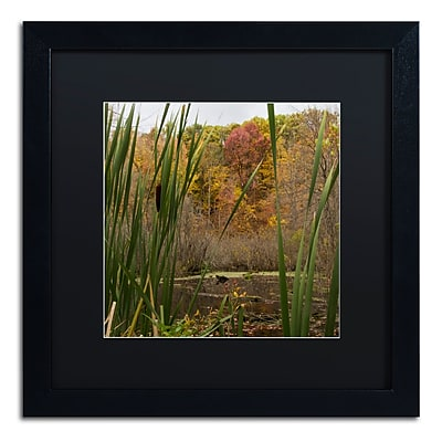 Trademark Fine Art Kurt Shaffer 'Autumn Marsh' 16 x 16 (886511701892)