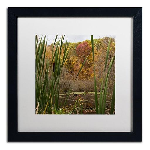 Trademark Fine Art Kurt Shaffer 'Autumn Marsh'  16 x 16 (KS01022-B1616MF)