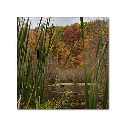 Trademark Fine Art Kurt Shaffer 'Autumn Marsh' 24 x 24 (KS01022-C2424GG)