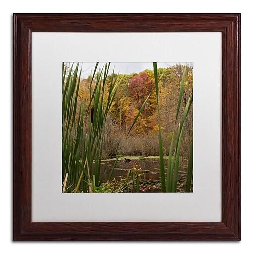 Trademark Fine Art Kurt Shaffer 'Autumn Marsh'  16 x 16 (KS01022-W1616MF)