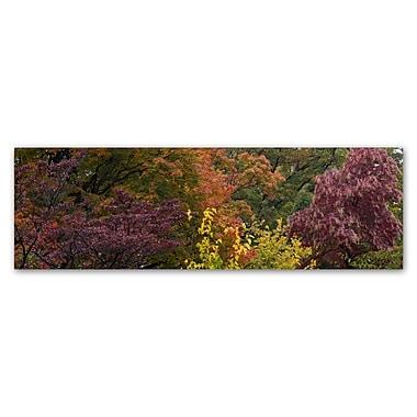 Trademark Fine Art Kurt Shaffer 'Autumn's Diversity' 10 x 32 (KS01024-C1032GG)