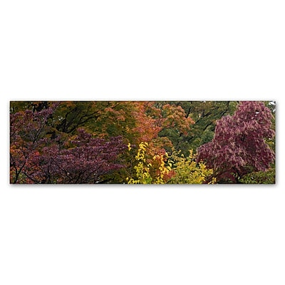 Trademark Fine Art Kurt Shaffer 'Autumn's Diversity' 10 x 32 (KS01024-C1032GG)
