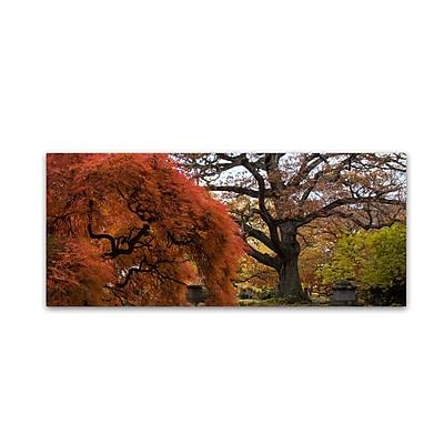 Trademark Fine Art Kurt Shaffer 'Beautiful Slice of Autumn' 14 x 32 (KS01025-C1432GG)
