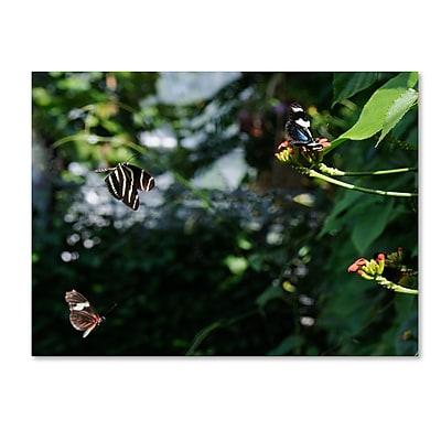 Trademark Fine Art Kurt Shaffer 'Butterflies in Flight' 24 x 32 (KS01027-C2432GG)