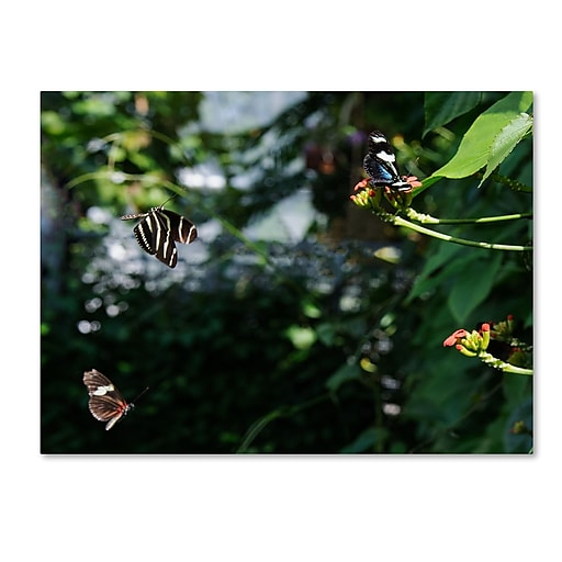 Trademark Fine Art Kurt Shaffer 'Butterflies in Flight'  35 x 47 (KS01027-C3547GG)