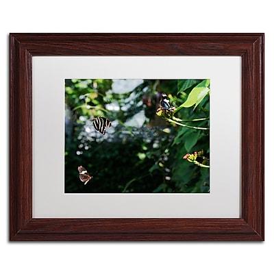 Trademark Fine Art Kurt Shaffer 'Butterflies in Flight' 11 x 14 (KS01027-W1114MF)