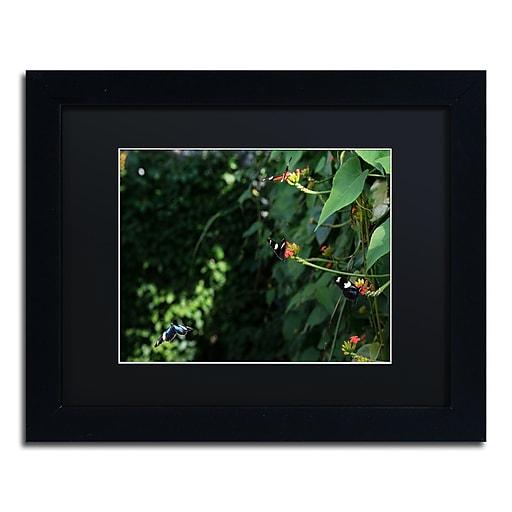 Trademark Fine Art Kurt Shaffer 'Butterflies'  11 x 14 (886511702295)