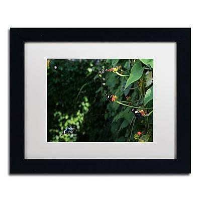 Trademark Fine Art Kurt Shaffer 'Butterflies' 11 x 14 (KS01028-B1114MF)