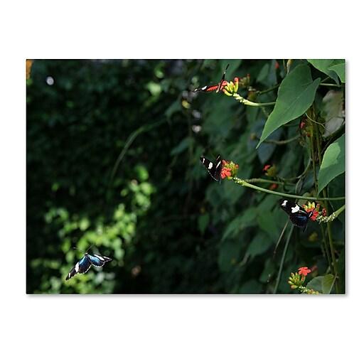 Trademark Fine Art Kurt Shaffer 'Butterflies'  14 x 19 (KS01028-C1419GG)