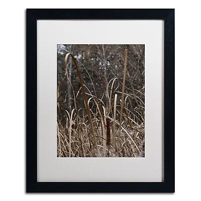 Trademark Fine Art Kurt Shaffer 'Cattail Seeds in Flight' 16 x 20 (KS01029-B1620MF)