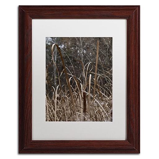 Trademark Fine Art Kurt Shaffer 'Cattail Seeds in Flight'  11 x 14 (KS01029-W1114MF)